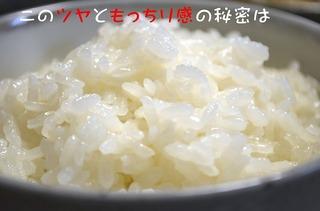 DSC_0837hosei_edited-10s-.jpg